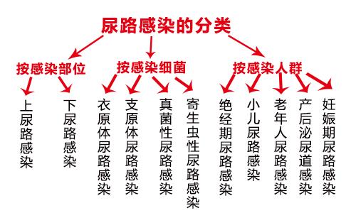 尿路感染的分类