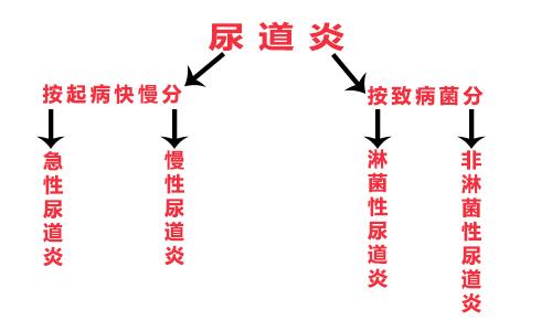 尿道炎的分类