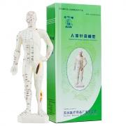 华佗牌 人体模型 (男模) 26cm